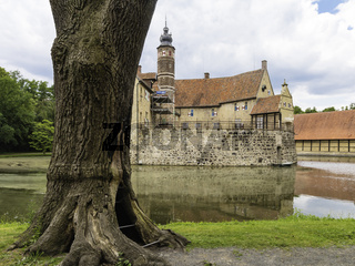 Alte Burg und alter Baum, Wasserburg Vischering, Lüdinghausen, Münsterland, NRW