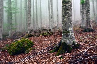 Autumn in the park of Mount Amiata, Tuscany