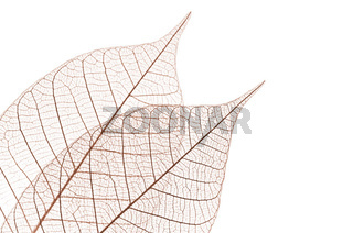 Skeleton leaves