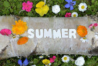 Summer text on flower meadow letter