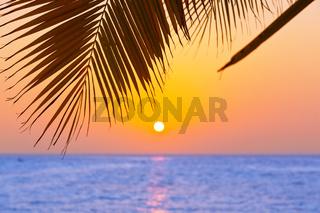 Palm leaf and sunset