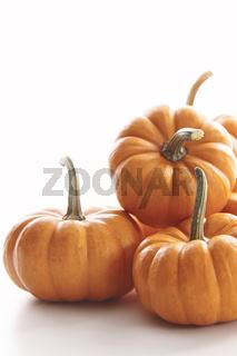 Mini pumpkins on white
