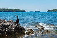 Cormorant on the beach in Istria
