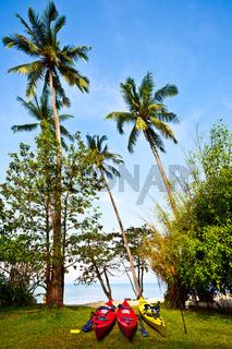 Kayaks on grass near palms. Thailand
