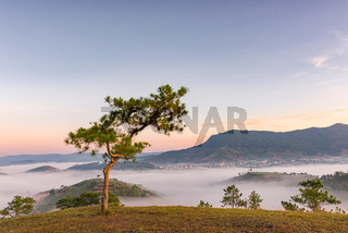 Lonely tree in the mist mountain, foggy landscape