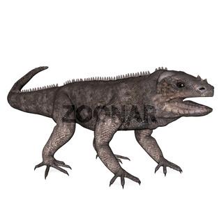 Leguan