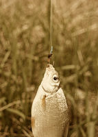 Fresh fish hanging on fishing rod and two hooks with worms, vintage colorized