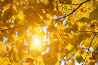 autumn leaves and sun