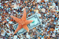 Starfish over two dollar banknote on coast covered with seashell