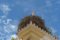 A stork looks over the edge of a nest