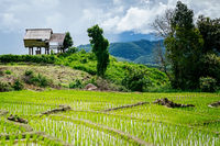 Rice terrace and mountain at Pa Bong Piang, Chiangmai,Thailand