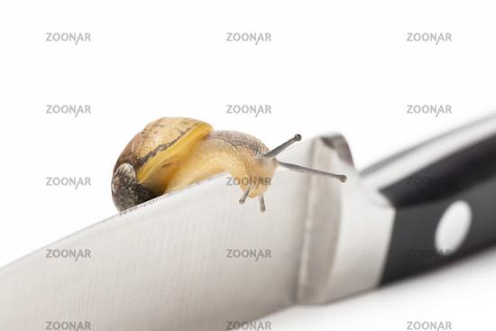 snail on knife