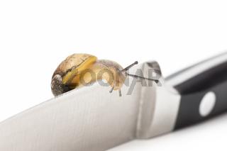Schnecke auf Messer snail on knife