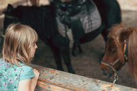 Cute little girl looking at a pony
