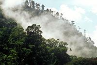 Nebelwald, Guatemala