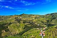 Terraced vineyards in the Rio Pinhao Valley, Sao Cristovao do Douro, Portugal
