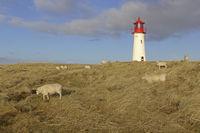 Lighthouse List West, Ellenbogen, Sylt, North Frisia, Schleswig-Holstein, Germany, Europe