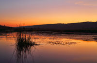 Penrith Wetlands