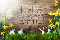 Sunny Easter Decoration, Gras, Text Hello Spring