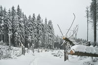Snow-covered forest in the Harz Mountains, Brocken, Germany