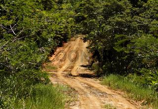 Sandstraße in Ecoparque de Una, Atlantischer Regenwald, Mata Atlântica, Bahia, Brasilien, Südamerika