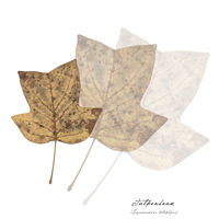 Collage with leaves of silver maple