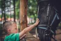 Cute little boy touching horse head