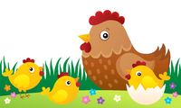 Chicken topic image 5