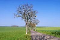 Burgund Allee im Frühling - Burgundy, tree-lined road