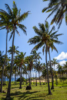 Anakena palm beach and Moais statues site ahu Nao Nao, easter island
