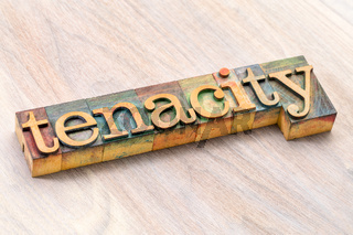 tenacity word abstract in wood type