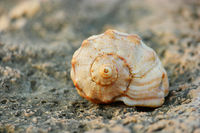 Spiral Shell on the rock