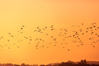 Birds flying in the rays of dawn