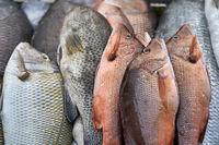 Fresh fishes on market