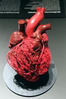 Präparat, Plastinat, Blutgefäße des menschlichen Herzens,   Mens