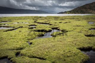Saltmarsh in Scotland