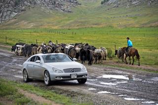 Ein Herde Yaks und ein Mercedes Personenwagen begegnen sich auf einer schlammigen Landstrasse, Mongo