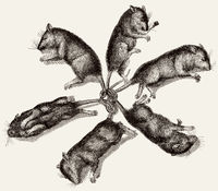 Six rats are joined at the tails, illustration, 19th century
