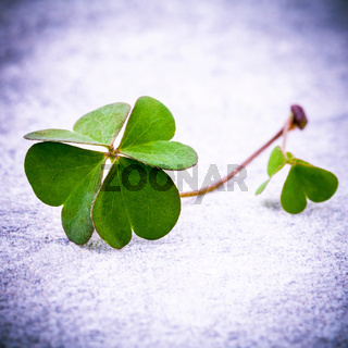 Clovers leaves on Stone .The symbolic of Four Leaf Clover the first is for faith, the second is for hope, the third is for love, and the fourth is for lucky . Clover and shamrocks is symbolic dreams .