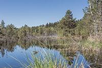Moorwaters in the Spatenbraeufilze