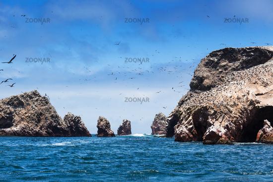 ocean and birds on sunny day