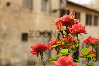 Flower with houses in background
