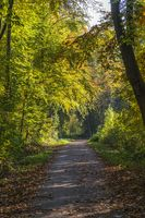 Forest road in golden autumn with sunshine