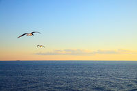 Seascape with flying seagulls