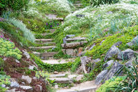 Stone steps and beautiful flowers.
