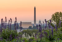 Dawn from Netherlands Cotillion of Washington DC
