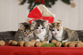 drei Kaetzchen Weihnachten / three kitten christmas