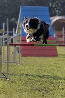 Dog agility 2015 at Hamburg, Germany