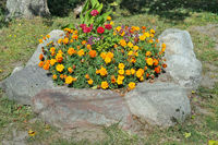 Orange maridolds flowers  blossom on a rural flower bed