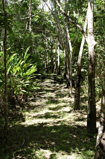 Atlantischer Regenwald, Mata Atlântica, Ecoparque de Una, Bahia, Brasilien, Südamerika